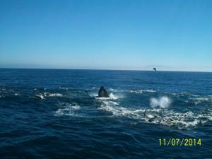 santa cruz whale watching monterey bay