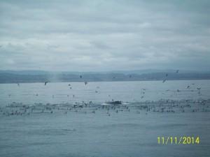 Santa Cruz Whale Watching, Monterey Bay, California Photo: Michael Nelson