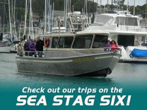 seastag-six-AD