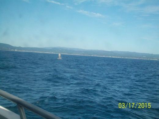 Gray Whale spy hop. Monterey Bay, with Santa Cruz Whale Watching. Photo: Michael Nelson