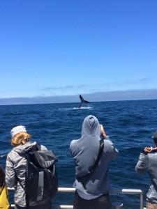 whales monterey santa cruz