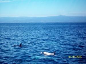 dolphins santa ctuz monterey