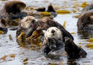 otters jim goff