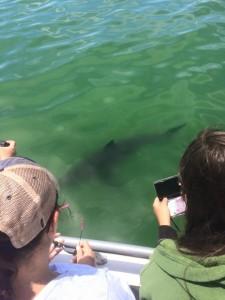 Shark Week in Santa Cruz! Photo: Azure Cohen
