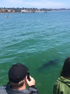 sharks santa cruz monterey