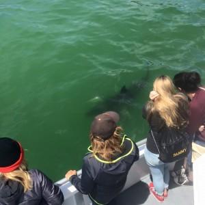 sharks 6-30 2
