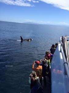 Orca Monterey Bay