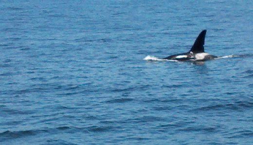 2012-06-16_12-21-29_218.ORCA.kjs