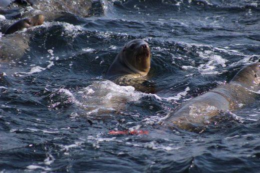Santa Cruz Whale Watching sea lion