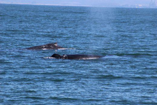 monterey whales
